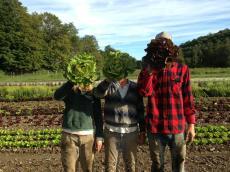lettuce farmer